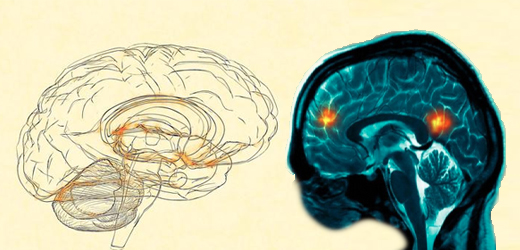 neuro vs psych